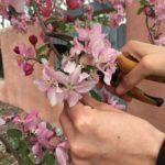 crabapple blossom harvest